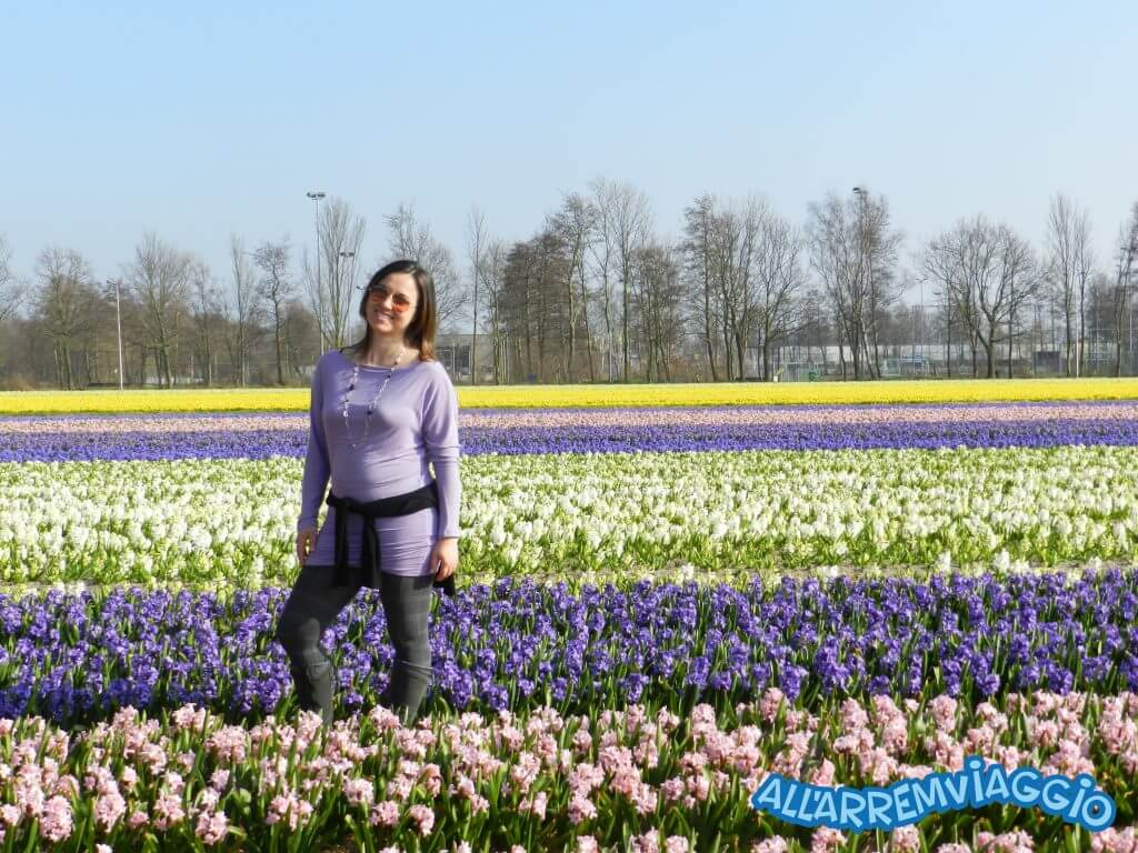 viaggio_in_olanda_per_la_fioritura_dei_tulipani