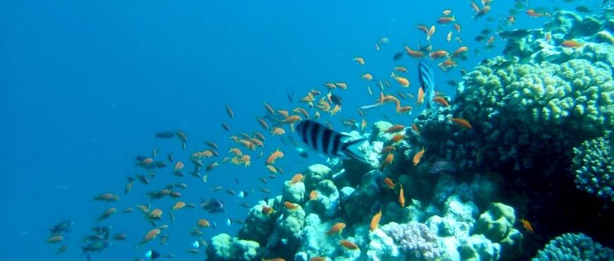 allarremviaggio, viaggiare, con, bambini, egitto, marsa, alam, mar, rosso, marrosso, barrieracorallina, reef, snorkeling