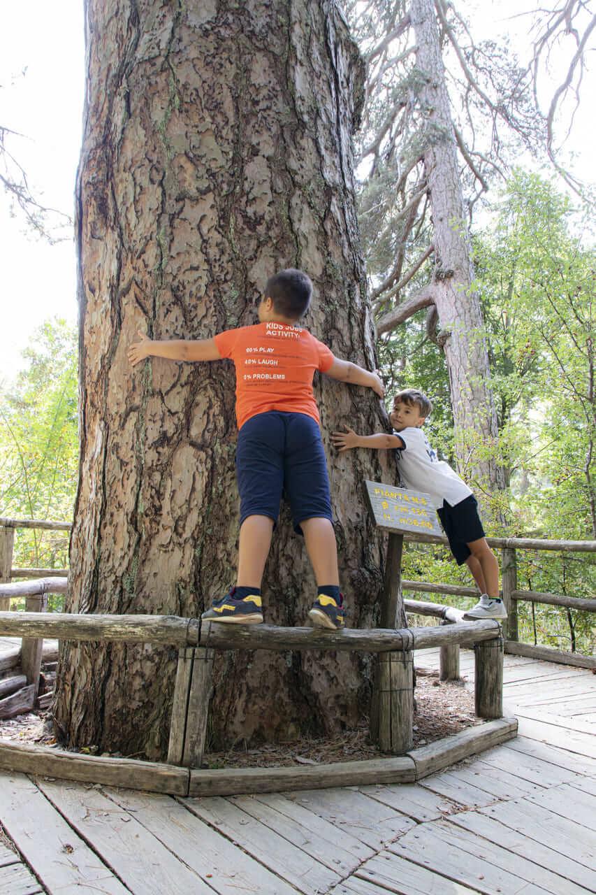 abbraccio alberi giganti sila