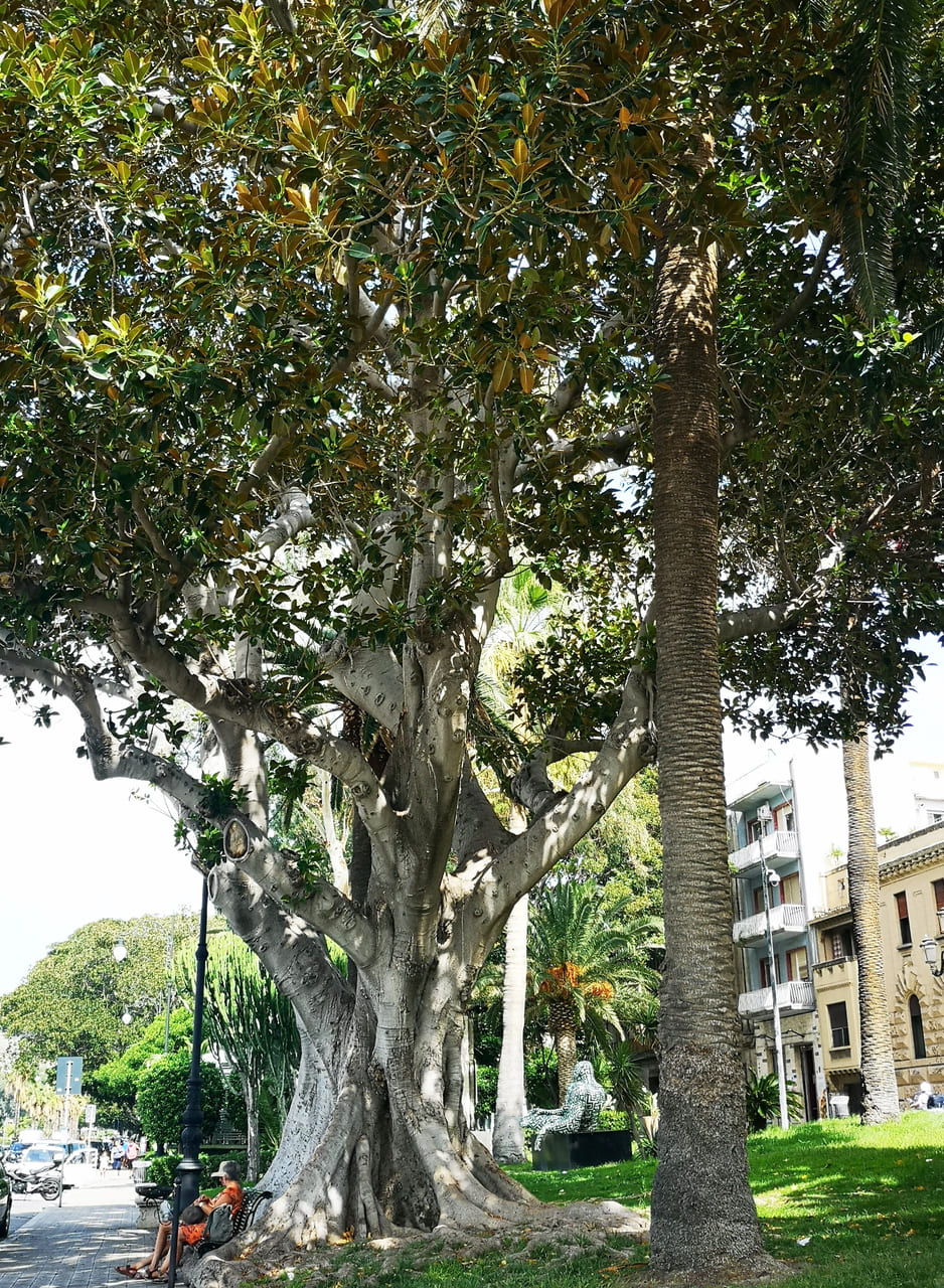 piante tropicali lungomare reggio calabria