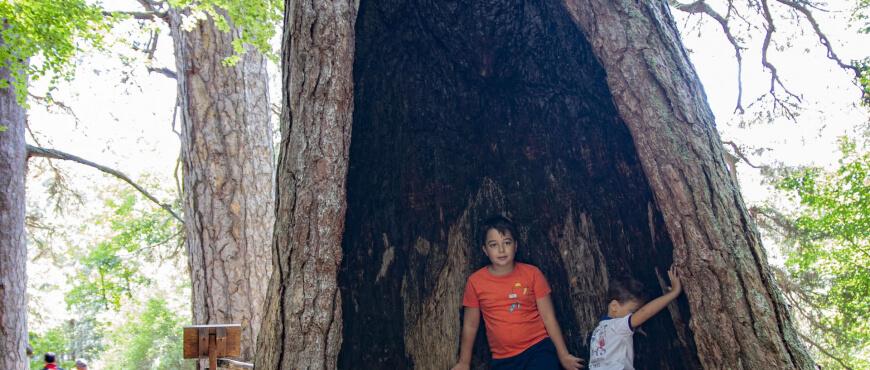 giganti della sila con i bambini
