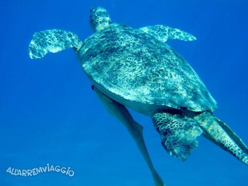 allarremviaggio viaggiare con bambini piratiinviaggio egitto marsaalam reef barrieracorallina pesci abudabbab (11)