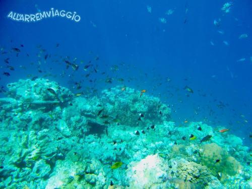 allarremviaggio viaggiare con bambini piratiinviaggio egitto marsaalam reef barrieracorallina pesci abudabbab (15)