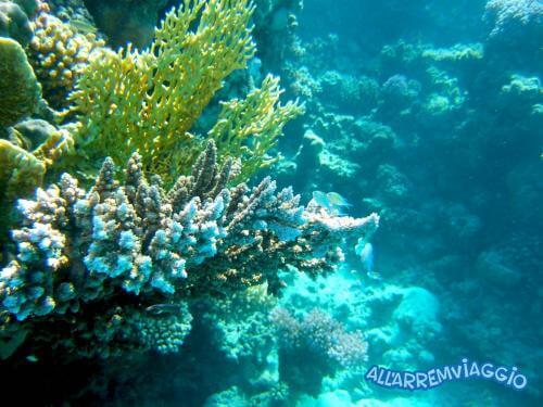 allarremviaggio viaggiare con bambini piratiinviaggio egitto marsaalam reef barrieracorallina pesci abudabbab (22)