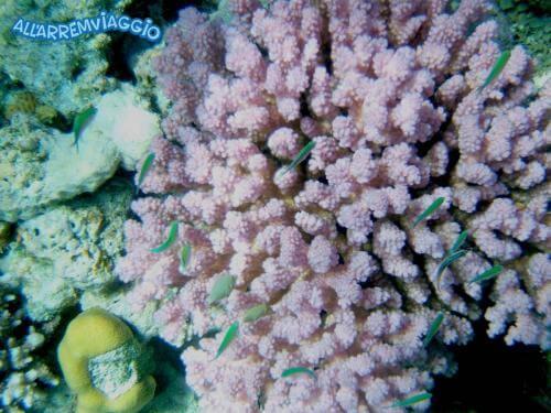 allarremviaggio viaggiare con bambini piratiinviaggio egitto marsaalam reef barrieracorallina pesci abudabbab (23)
