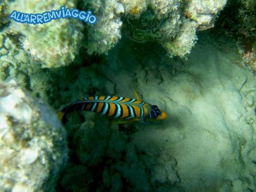allarremviaggio viaggiare con bambini piratiinviaggio egitto marsaalam reef barrieracorallina pesci abudabbab (24)