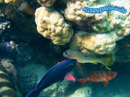 allarremviaggio viaggiare con bambini piratiinviaggio egitto marsaalam reef barrieracorallina pesci abudabbab (27)