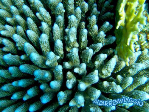 allarremviaggio viaggiare con bambini piratiinviaggio egitto marsaalam reef barrieracorallina pesci abudabbab (28)