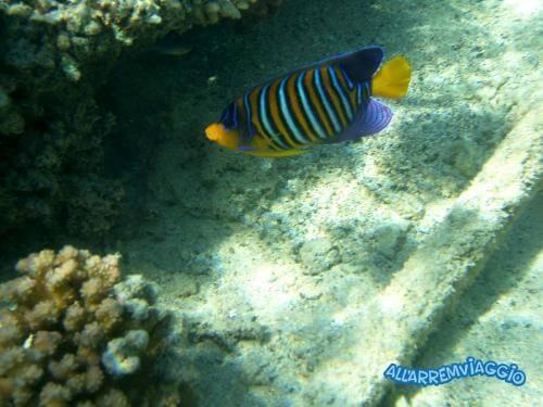 allarremviaggio viaggiare con bambini piratiinviaggio egitto marsaalam reef barrieracorallina pesci abudabbab (3)