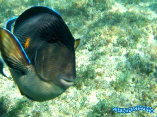 allarremviaggio viaggiare con bambini piratiinviaggio egitto marsaalam reef barrieracorallina pesci abudabbab (4)
