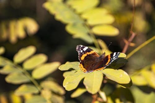 farfalla sentiero escursione sul vesuvio