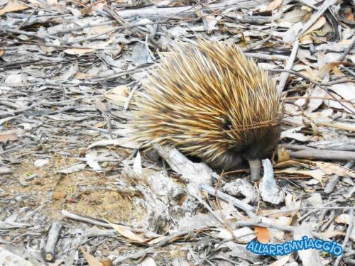 Kangaroo_island_cosa_vedere