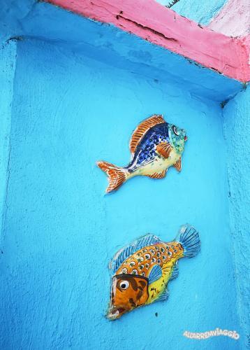 pesci colorati vietri sul mare